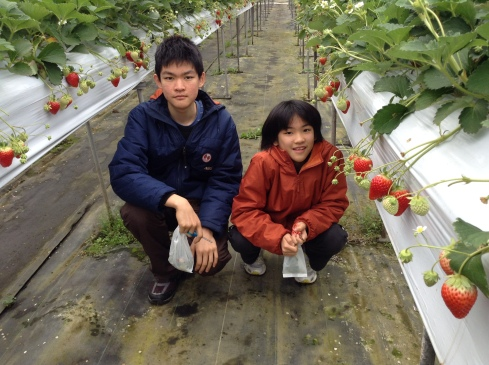 Happiness ... is strawberry-picking time! Photo taken at Ichigo Fields, Ibaraki