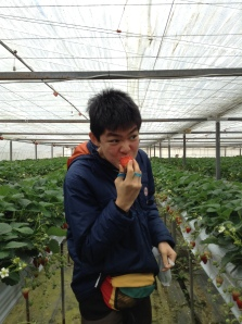 Amateur strawberry farmer tasting all twenty varieties of strawberries
