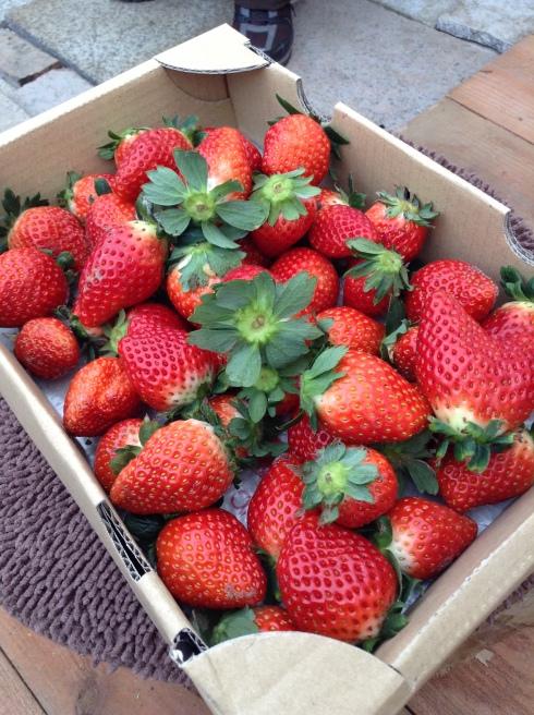Free fruit to take away ...