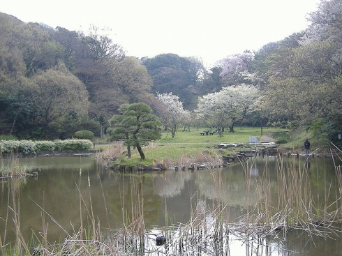 "The natural park in Yokohama where my daughter and her schoolmates had their ""forest adventures"""