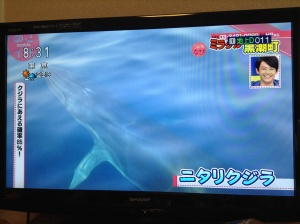 A whale videoed by an eco-tourist (Asaichi NHK TV feature)